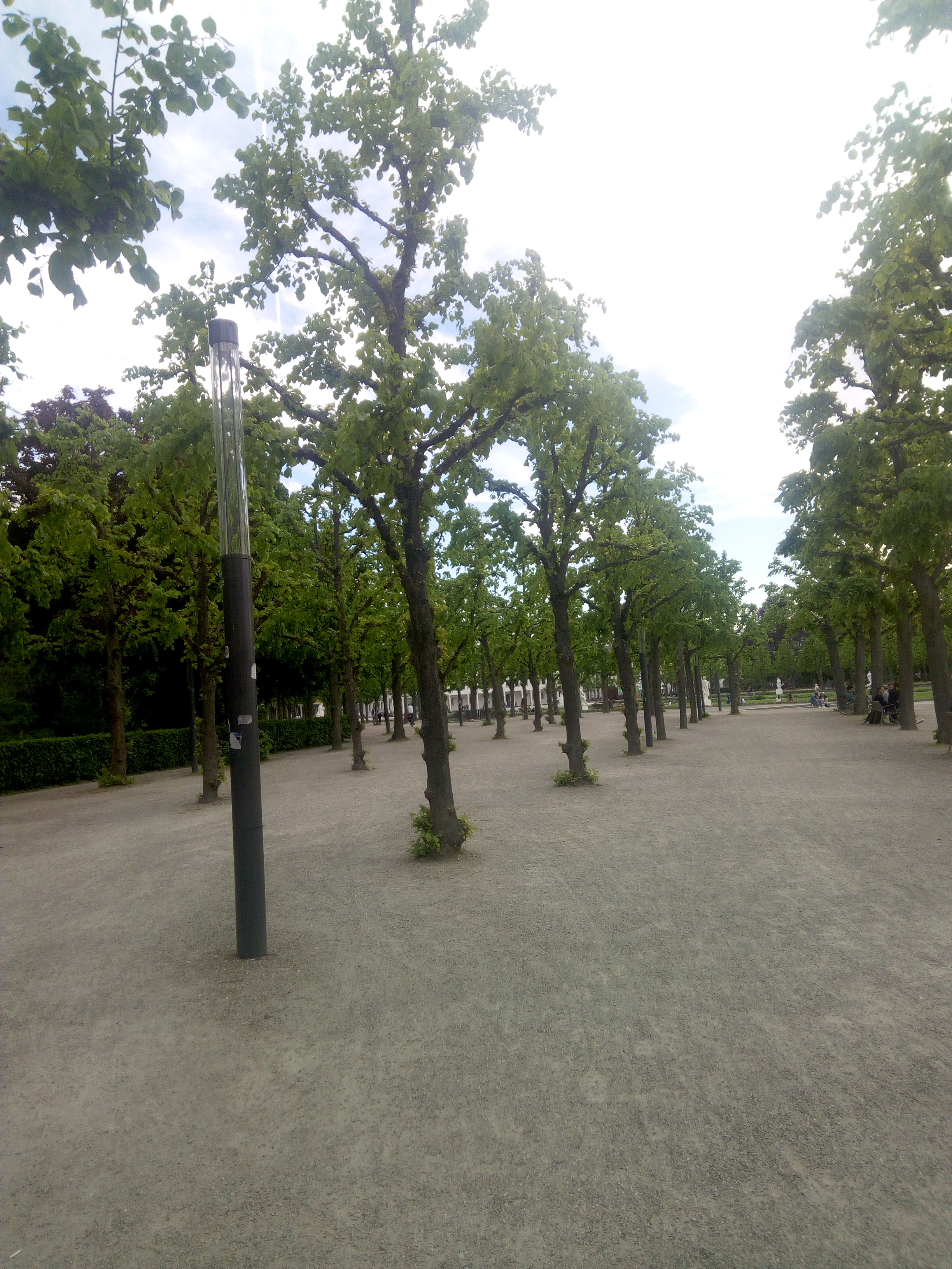 same trees during the summer